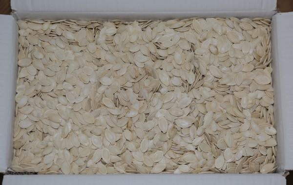 Seminţe dovleac